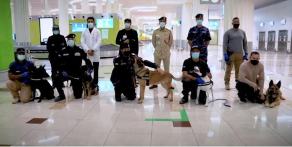 В воздушной гавани Дубая используют собак для обнаружения коронавируса